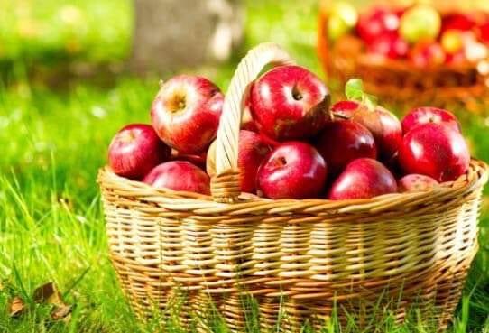 ملتقى وطني للتفاح في ميدلت